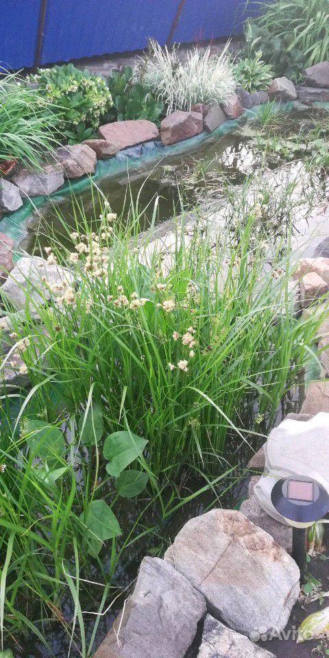 Растения для пруда купить на Зозу.ру - фотография № 6