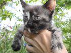 Отдам котенка-кошечку в добрые руки