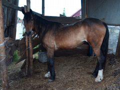 Животные лошадь