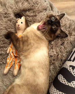 Случка Кота
