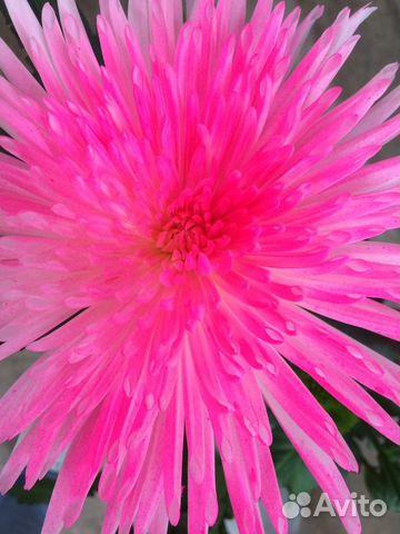 Цветы купить калининский район купить цветы апатиты