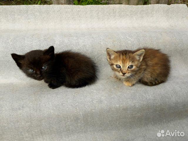 Авито объявления котята новозыбков