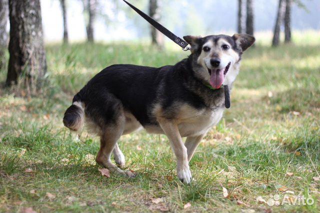 Маленькая собака Ласка ищет дом и маму купить на Зозу.ру - фотография № 7