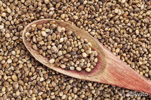 Семена конопли рыбалка купить на дискотеке чубуков накурившись марихуаны