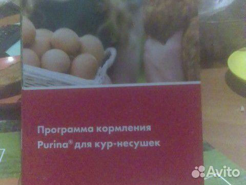 Hühner Broiler 89875253183 kaufen 3