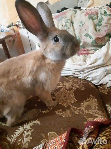 Кролик декоративный 89292032006 купить 4