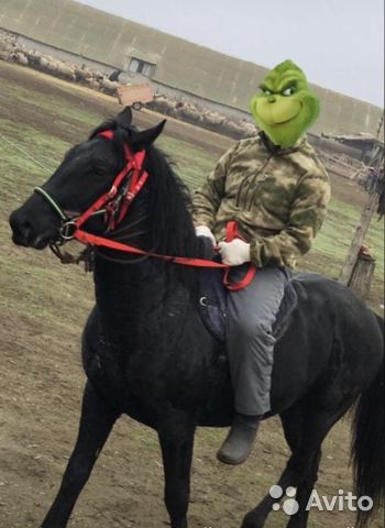 Карачаевский жеребец  купить 3