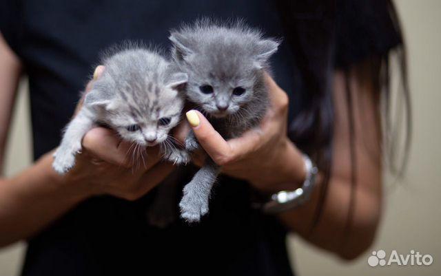 Котята в добрые руки  89383168770 купить 2