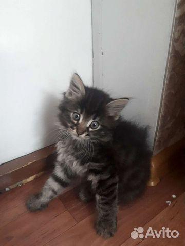 Котенки  89011211352 купить 1
