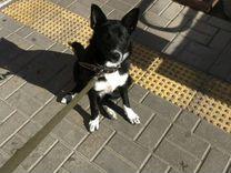 Собака Дельта
