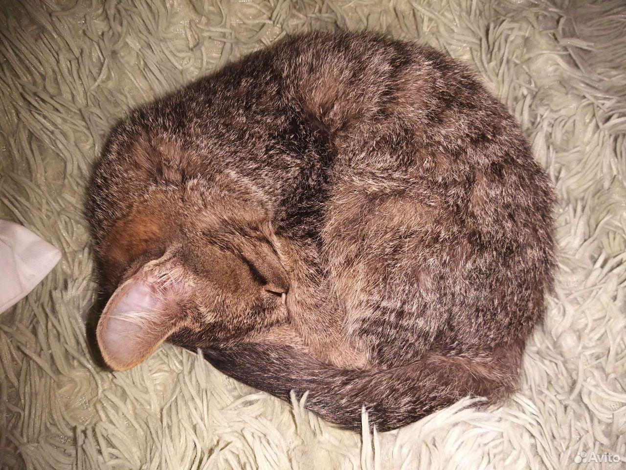 Отдам серого котенка в добрые руки  89502787846 купить 8