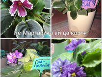 Фиалки, цветы