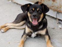 Маленькая собака бесплатно — Собаки в Геленджике