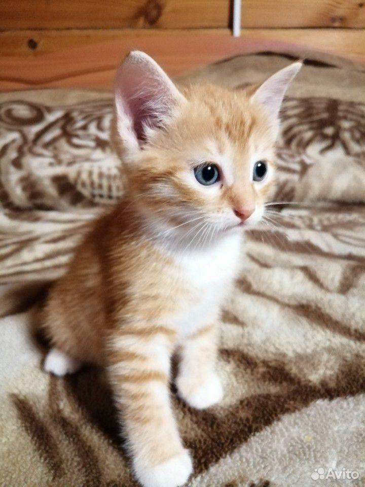 Котенок(кот)  89040015219 купить 1