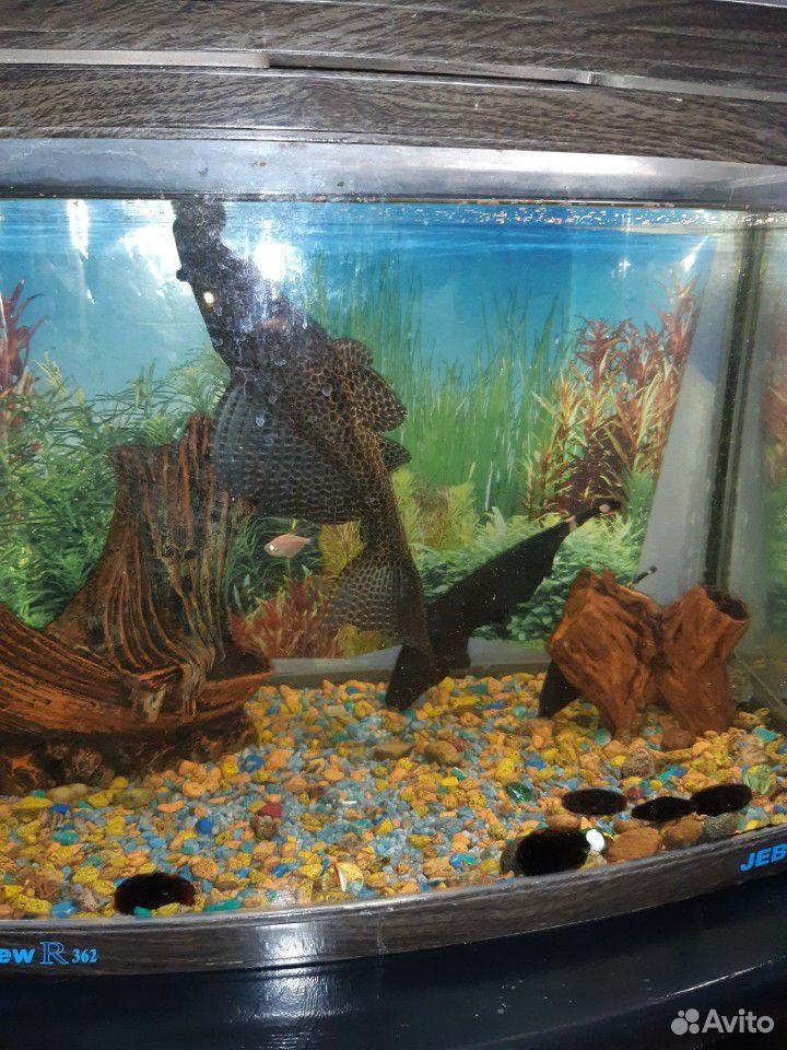 Продам аквариум с рыбоми, 90лит Выс50 см,дл60см