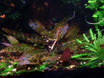 Криптокорина нури и другие растения в Колпино