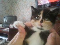 Отдам в добрые руки маленьких симпатичных котят