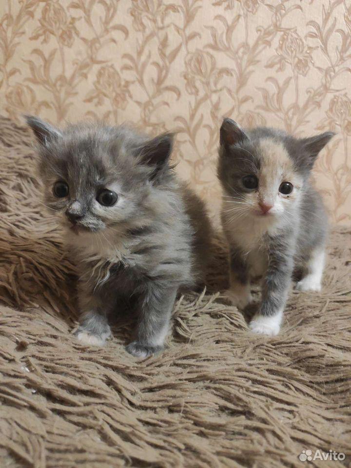 Kätzchen  89105678438 kaufen 2