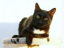 Особенный котик