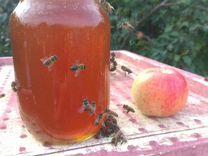 Свежий мед с семейной пасеки