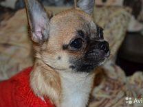 Мальчишка — Собаки в Геленджике